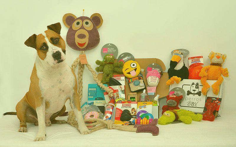 Cajas para Perros