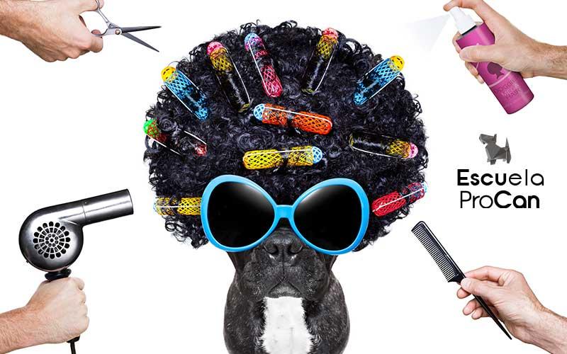 proyectos-peluqueria-canina-madrid